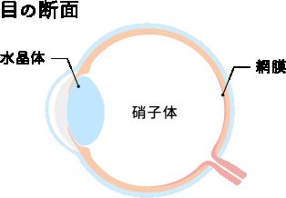 硝子体(しょうしたい)とは目の組織の中にある 透明なゼリー状部分を指します。